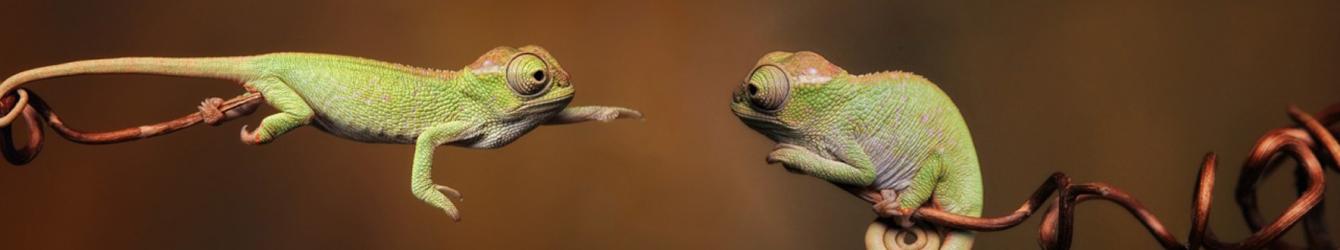 chameleons-wallpaper-header